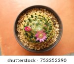 pink flowers are blooming | Shutterstock . vector #753352390