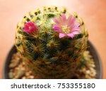 pink cactus flowers make me... | Shutterstock . vector #753355180