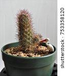 art of cactus | Shutterstock . vector #753358120