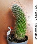 art of cactus | Shutterstock . vector #753358123