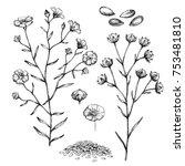flax set.  botanical... | Shutterstock . vector #753481810