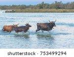 Bulls Running In The Water ...