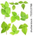 set of fresh green leafs ... | Shutterstock . vector #753515788