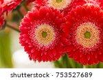 bunch of beautiful gerberas in... | Shutterstock . vector #753527689