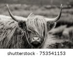 scottish highland cattle | Shutterstock . vector #753541153