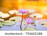 lotus flower with gold light | Shutterstock . vector #753602188