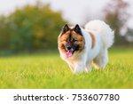 portrait of a cute elo dog on a ...   Shutterstock . vector #753607780