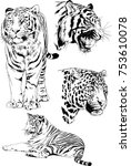 set of vector drawings on the... | Shutterstock .eps vector #753610078