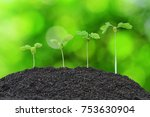 growing plant in soil isolated... | Shutterstock . vector #753630904