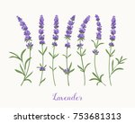 vector lavender collection.... | Shutterstock .eps vector #753681313