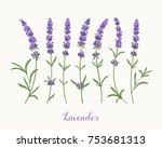 vector lavender collection....   Shutterstock .eps vector #753681313