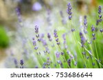 close up photo of lavender...   Shutterstock . vector #753686644