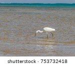The Heron Hunts Fish On The...