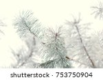 Winter. Branch Of Spruce Or...