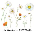 Set Of Chamomile  Daisy  And...