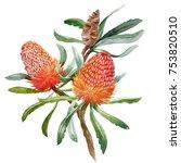 watercolour illustration of... | Shutterstock . vector #753820510