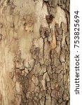 old wood bark texture... | Shutterstock . vector #753825694