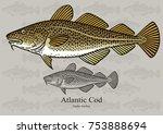 atlantic cod  skrei. vector... | Shutterstock .eps vector #753888694