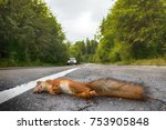 adult squirrel hit by car on... | Shutterstock . vector #753905848