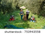 olive picking during winter... | Shutterstock . vector #753943558