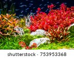 planted tropical aquarium with...   Shutterstock . vector #753953368