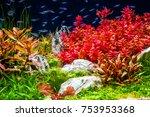 beautiful aquarium tank with...   Shutterstock . vector #753953368