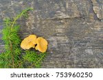 yellow fresh chanterelles with... | Shutterstock . vector #753960250