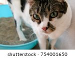 Stock photo cat using toilet cat in litter box for pooping or urinate pooping in clean sand toilet a cat 754001650