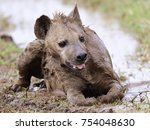 spotted hyena taking a mud bath ... | Shutterstock . vector #754048630