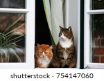 Two Cats Sitting By The Window...
