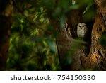 indian scops owl  otus... | Shutterstock . vector #754150330