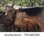 two horses nuzzling and giving... | Shutterstock . vector #754180330