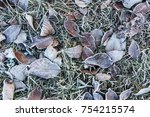 frosted leaves. hoarfrost. | Shutterstock . vector #754215574
