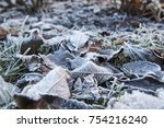 frosted leaves. hoarfrost. | Shutterstock . vector #754216240
