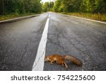 adult squirrel hit by car on... | Shutterstock . vector #754225600