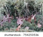 realistic camouflage seamless... | Shutterstock . vector #754253536