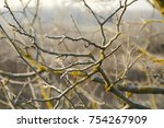 Bare Tree Branches In Pale Light