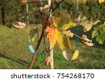 yellow fall leaves with... | Shutterstock . vector #754268170