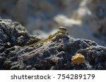 lizard on stone in nature.   Shutterstock . vector #754289179