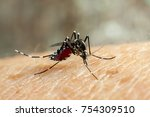 dengue  zika  chikungunya and... | Shutterstock . vector #754309510