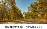 Pecan Tree Lined Road In...
