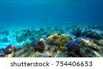 coral reef. diving. underwater...   Shutterstock . vector #754406653