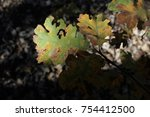 oak wilt on leaves | Shutterstock . vector #754412500