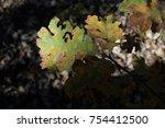 oak wilt on leaves | Shutterstock . vector #754412500