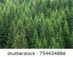 Fir Trees Forest Evergreen...