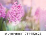 Abstract Pink Hyacinth Flowers...