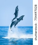 group of dolphins jumping on... | Shutterstock . vector #754497028