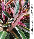 beautiful  plant with pink red...   Shutterstock . vector #754498858