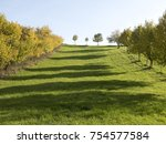 meadow field with row of trees... | Shutterstock . vector #754577584