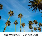 low section view of palm trees... | Shutterstock . vector #754635298